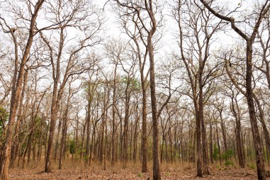 Kabini forest in summer