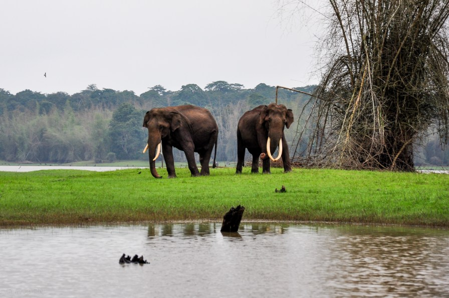 Wildlife safari in Kabini Forest Reserve