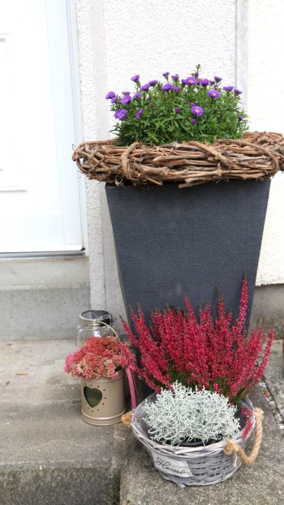 herbstaster blumen dekoration tür haustür