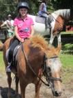 stella op paard