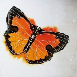 farfalla colore linea natura