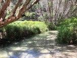 eli creek (foto: Anna Luciani)