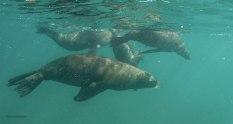 Leoni Marini nella Baia di Port Phillip (foto: Anna Luciani)