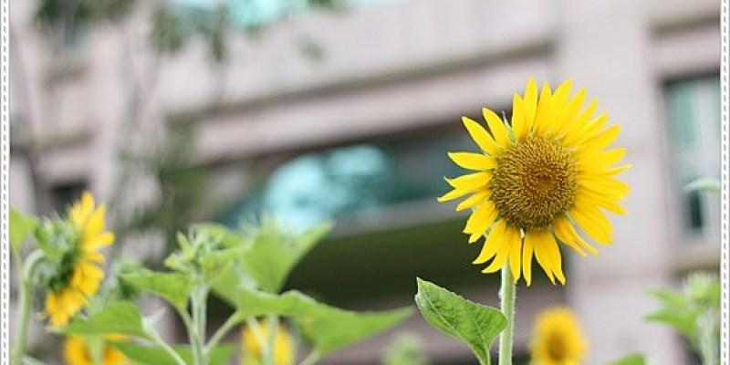 ﹝2Y3D﹞Summer。屬於向日葵的季節 & 在書香花園裡吃著早餐
