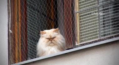 His Grumpiness, the cat, watching the people above Langer Graben lane sign