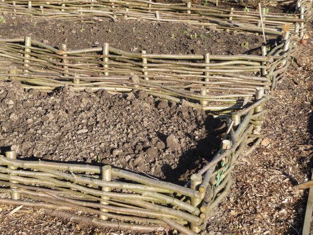 Hazel garden stakes