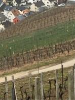 Steep Vineyard Slopes
