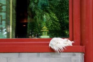 Sleeping cat // Chat qui dort