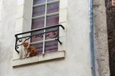 Helpless cat // Chat désemparé