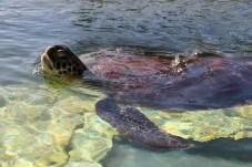 Turtle capillary waves // Ondes capillaires de tortue
