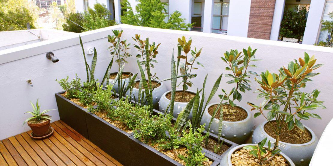 summertime apartment patio plants