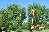 Canopy Movie & Tree Trimming To Separate Canopies