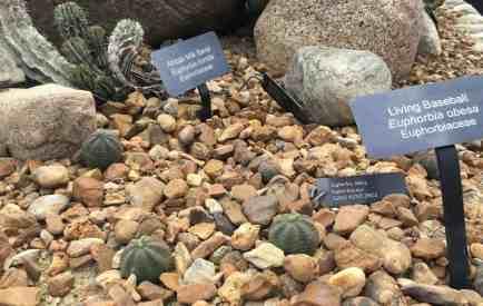 Matthaei Botanical Garden - Conservatory - Living Rocks