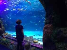 Sea Life Michigan Aquarium - Checking out the fish