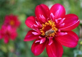 Botaniska 021
