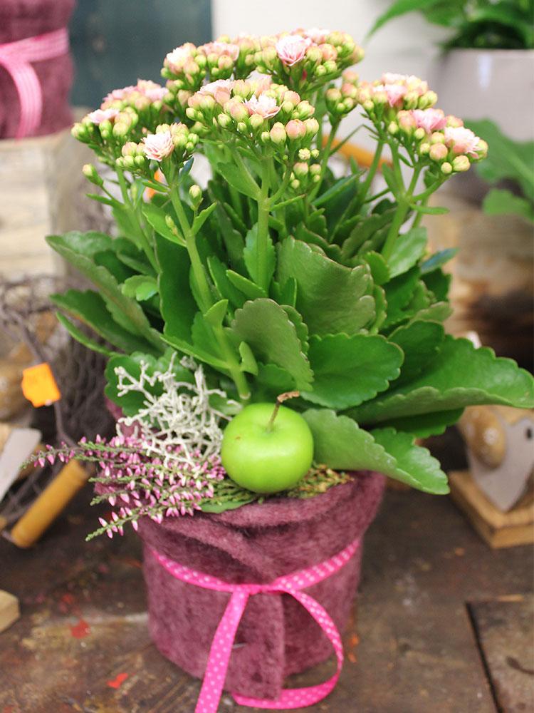 Topfpflanzen  Annas Blumen