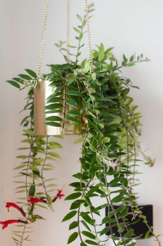 Thuisbeeld | Rachel van De Huismuts | Planten mogen niet ontbreken in het interieur