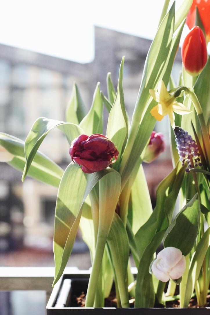 Lifestyle fotografie - fotografie planten bloemen - botanische fotografie