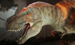 Tyrannosaurus Rex. Bild från Natural History Museum.