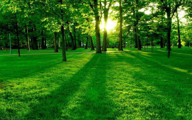 A chi sta bene e come indossare il verde acceso – Greenery