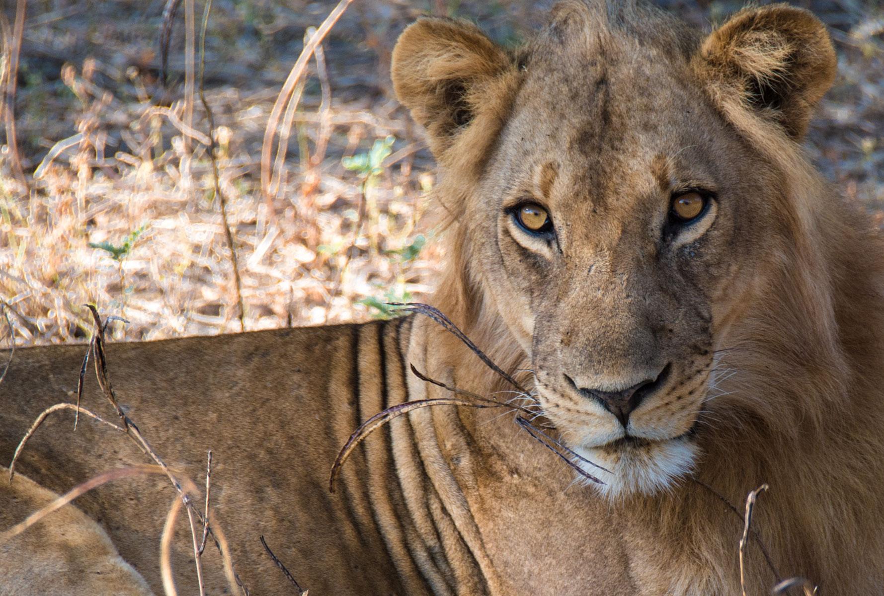 On a Robin Pope Walking Safari in Zambia: The Naughty Boys