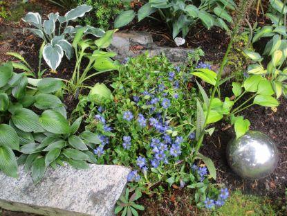 och närbild på gentianan som blommar fint