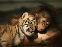 cute-baby-animals-14
