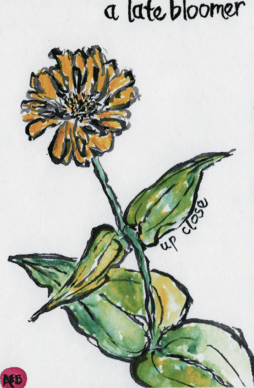Watercolor of late blooming marigold by Anne Burgevin