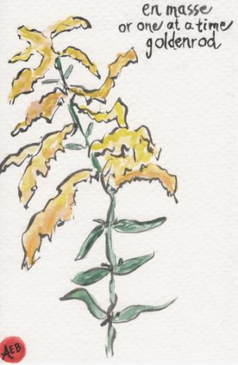 Goldenrod