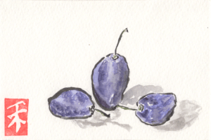 Purple Plums watercolor by Anne Burgevin
