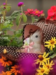Chocolat Box2