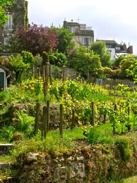 Oldest vineyard in Paris