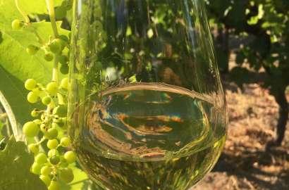 Har du lyst til å prøve en ny drue og vin denne sommeren? Her kommer noen tips, basert på nye viner som legges ut til salg 7 juli.