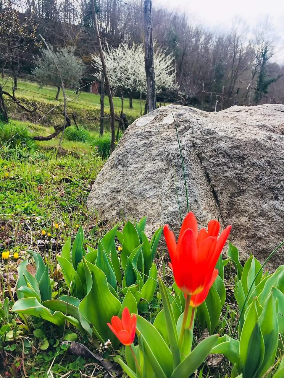 Gule blomster ligger i tepper på bakken mellom vinstokkene. Det er som om naturen pynter seg selv til påske på vingården. Det føles vemodig at påsken er over. Men nå kommer våren. Kveldene er lysere, snøen smelter, fuglene våkner og sola varmer. La oss nyte den og la den inspirere oss til å gjøre det vi drømmer om.