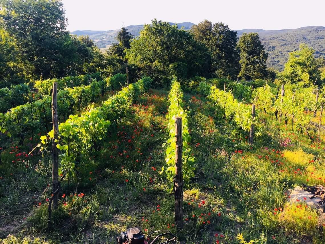 Lengter du etter alenetid - i så fall hvordan ville du tilbrakt den? Min tur alene til vingården i Italia i juni er ment som en blanding av ferie og fokus på egne prosjekter. Hengekøya lokker, men det er tepper av valmuer som bør fjernes.