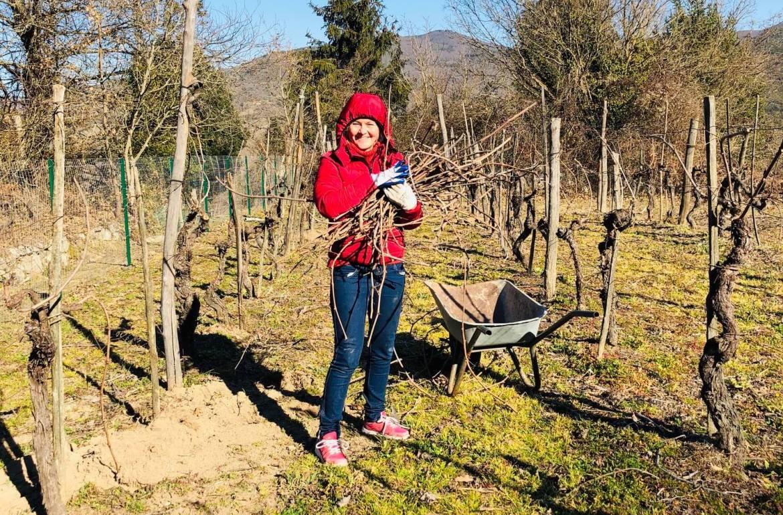 Vinterferie på vingården innebærer å beskjære vinstokker, og ikke minst rydde de mange grenene. Et nytt vinår settes i gang. Men det er ikke bare gårdsarbeid, selv om iskald vind fra Sibir preger dagene. Det er vinter og skiføre også her, og det er karnevalstid