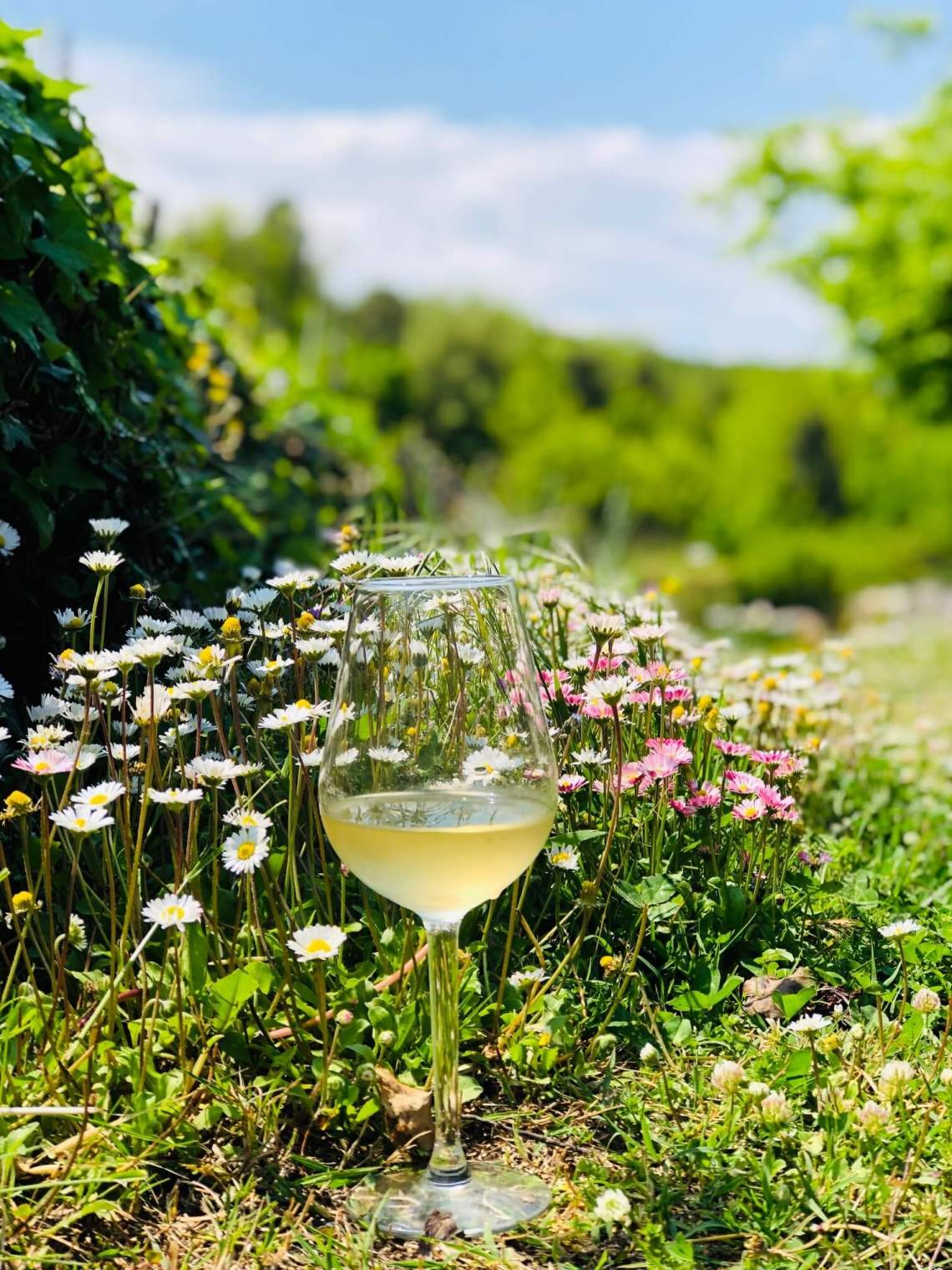 Det er tid for det slippet som fokuserer på lyse og lette viner tilpasset vår og sommer. I maislippet på Vinmonopolet er det mye lovende og godt.Vinene lanseres 3. mai.