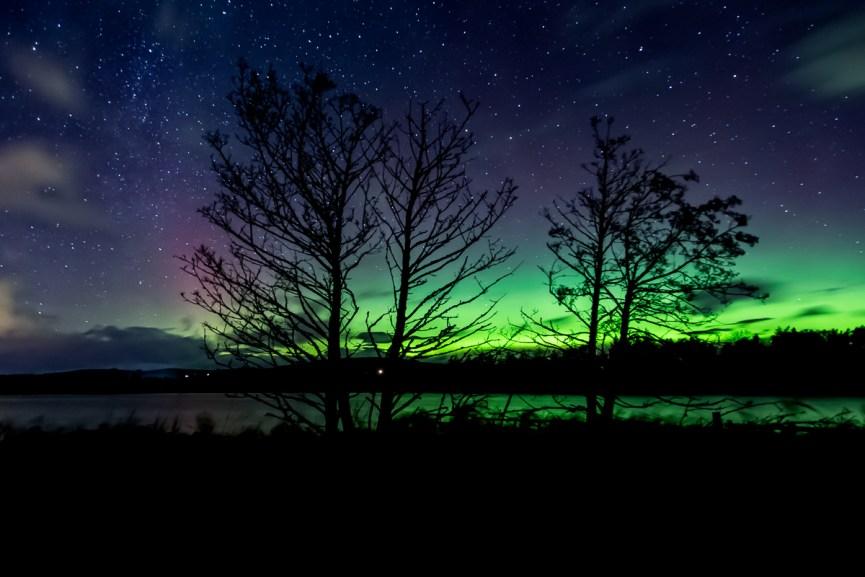 Northern Lights through the trees at Balgavies Loch, Angus