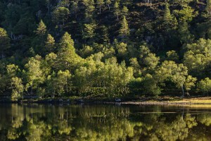 Trees reflecting on Loch Clair, Torridon at sunrise