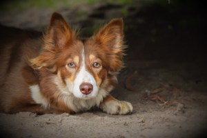 Photo of a dog taken by Anne Johnston Photography 1-2-1 tuition client