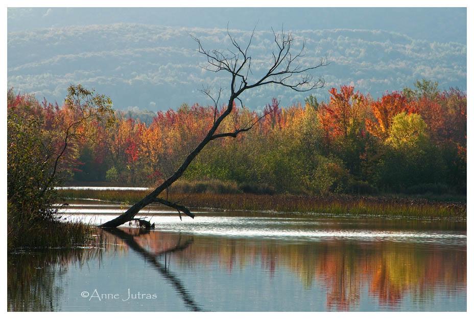 Lumière contrejour - Belles photos d'automne