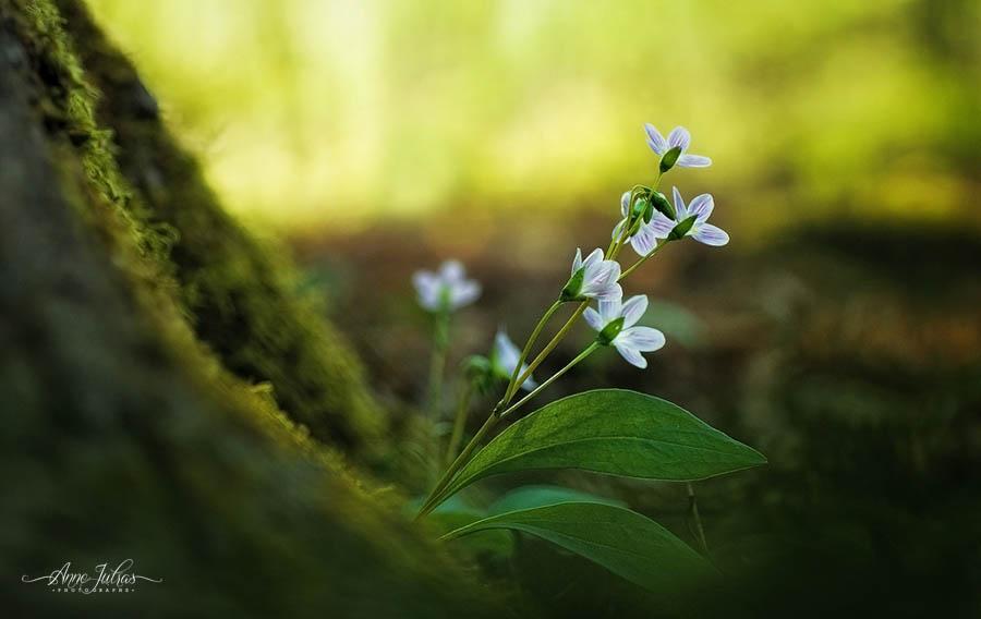 Photos de fleurs, conseil pour réussir ses photos de fleurs