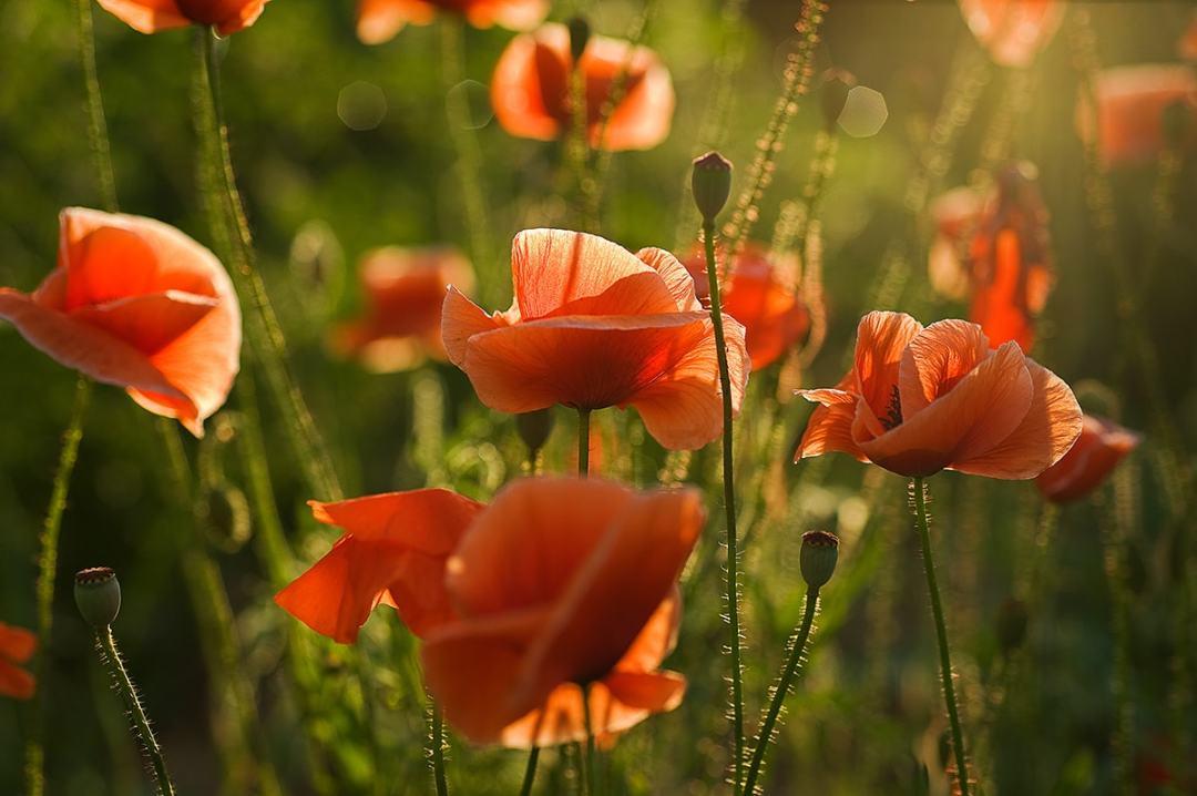 flare artistique ajouté à vos photos de fleurs