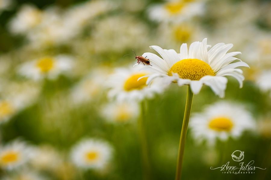 photos de fleurs - insecte ajouté