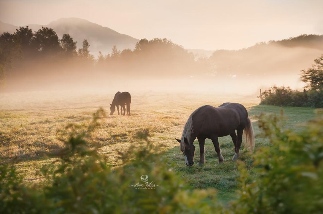 6 conseils pour photographier l'heure dorée, par Anne Jutras