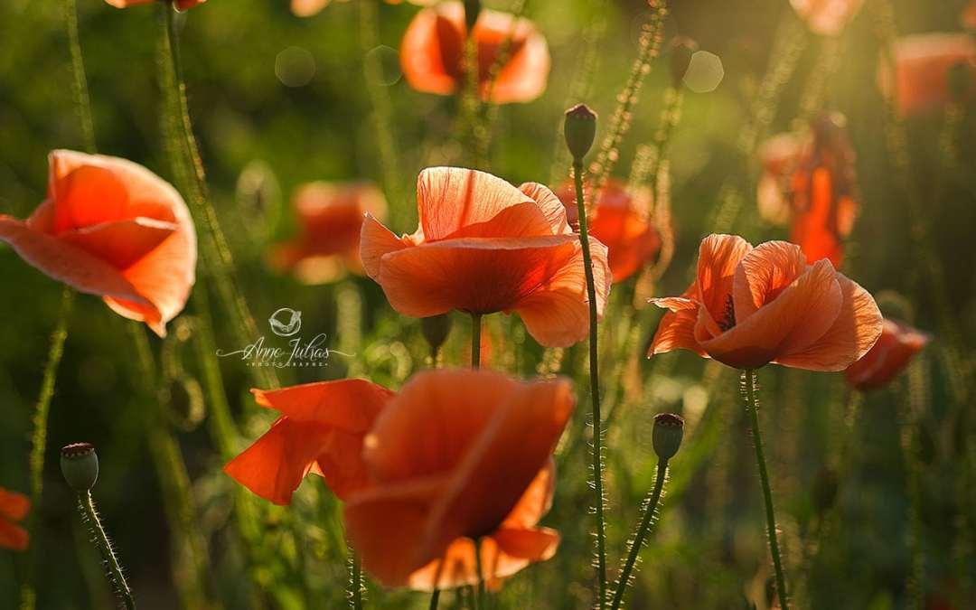 5 raisons pourquoi vous devriez photographier les fleurs