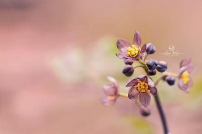 Fleurs de sous-bois