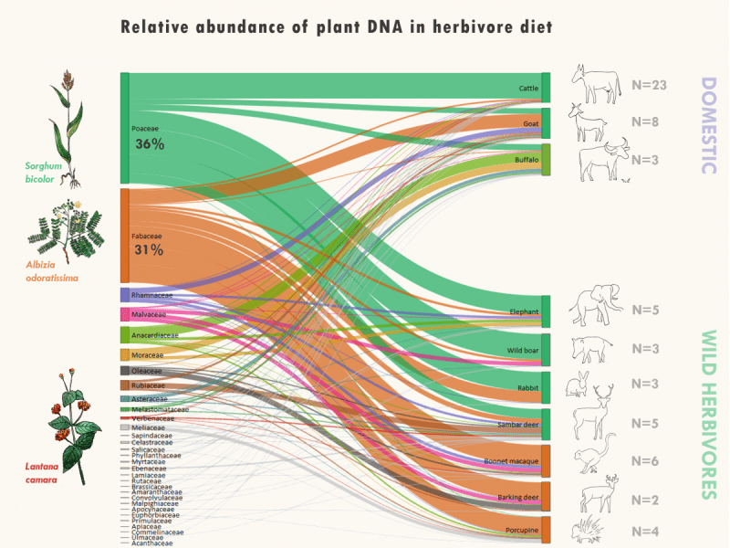 Sankey diagram showing relative reads abundance of plant DNA in herbivore faecal samples