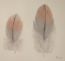 2 Galah feathers