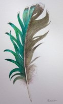Vivid green feather (Image and photo copyright: Anne Lawson, 2014)